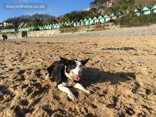 ted the farm dog at langland beach