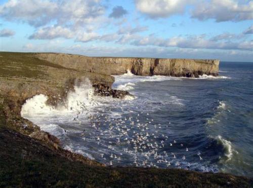 cliffs near stackpole head