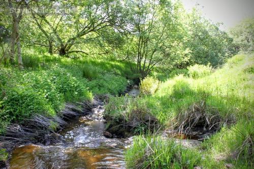 stream at trawsgrych