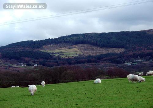 sheep grazing below