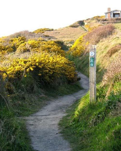 Coastal path in Pembrokeshire near Broad Haven