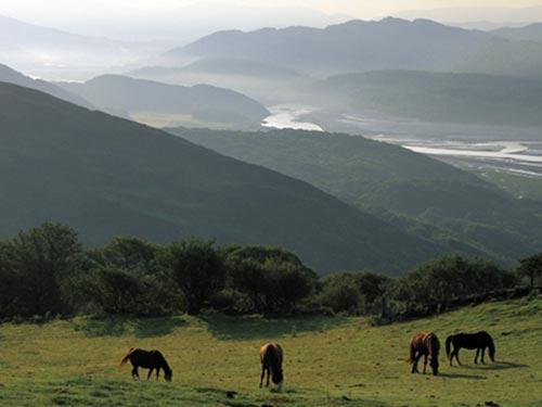 dovey estuary view