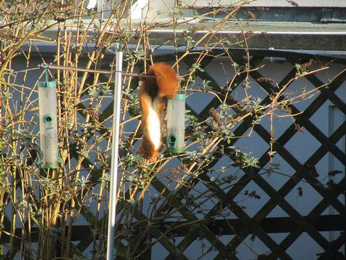 On squirrel proof bird feeder