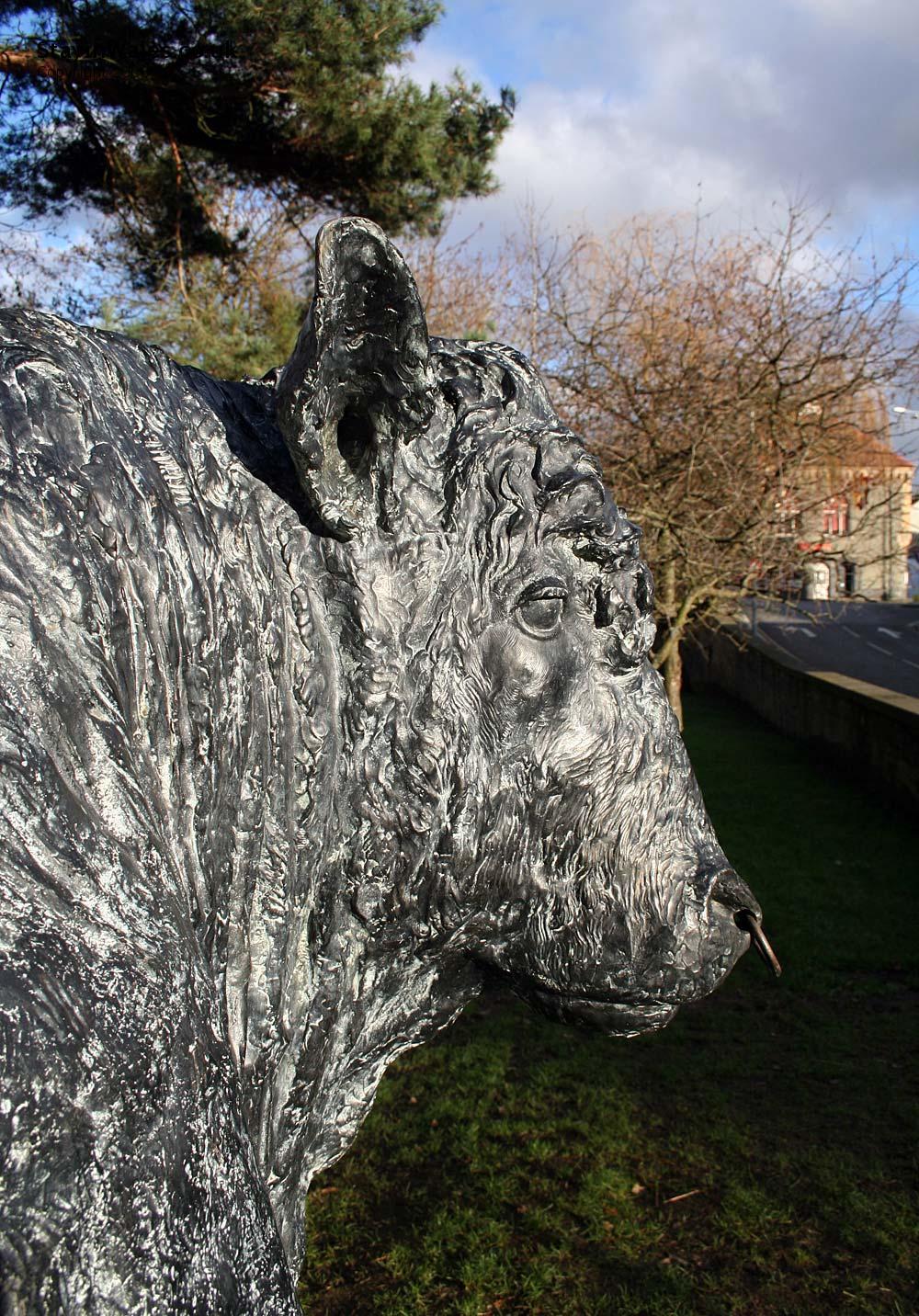 Builth Wells bull