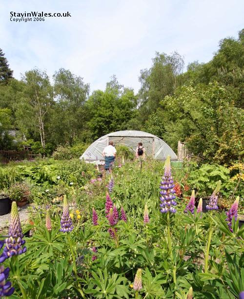 Organic garden polytunnel