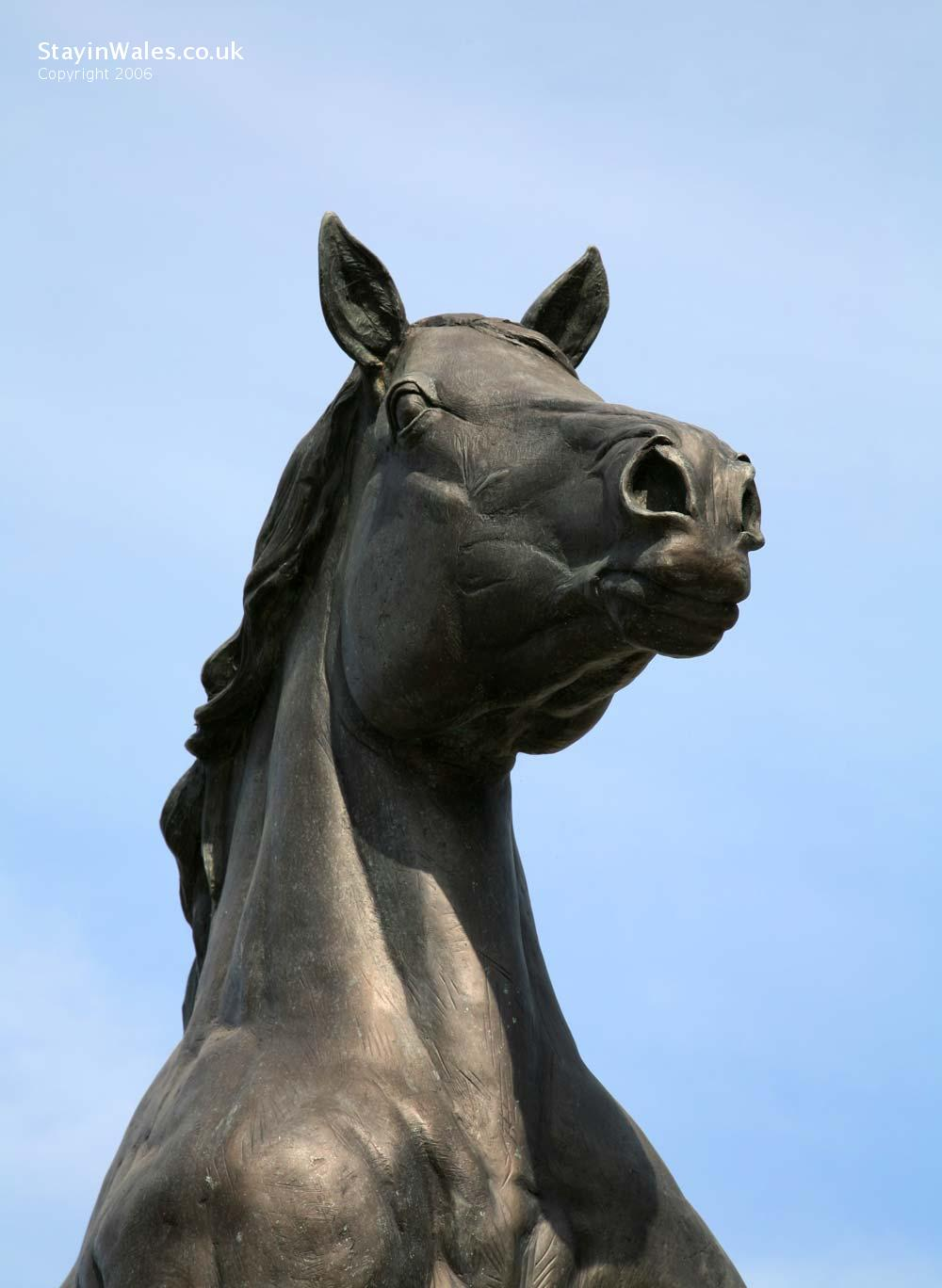 Welsh cob stallion Aberaeron