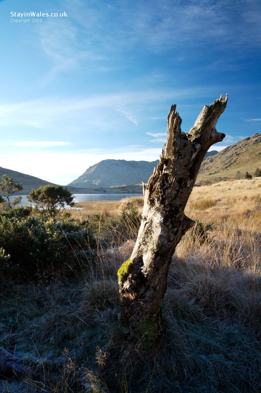 Gallt y Wenallt, Snowdonia