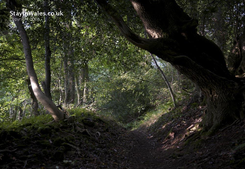 Woodland footpath near Tintern
