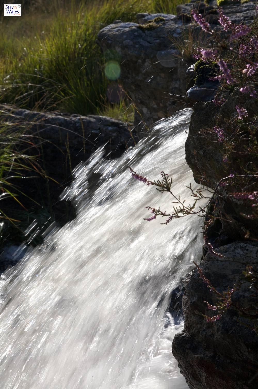 Mountain stream on the Esgair Gelli, running towards the Afon Ca