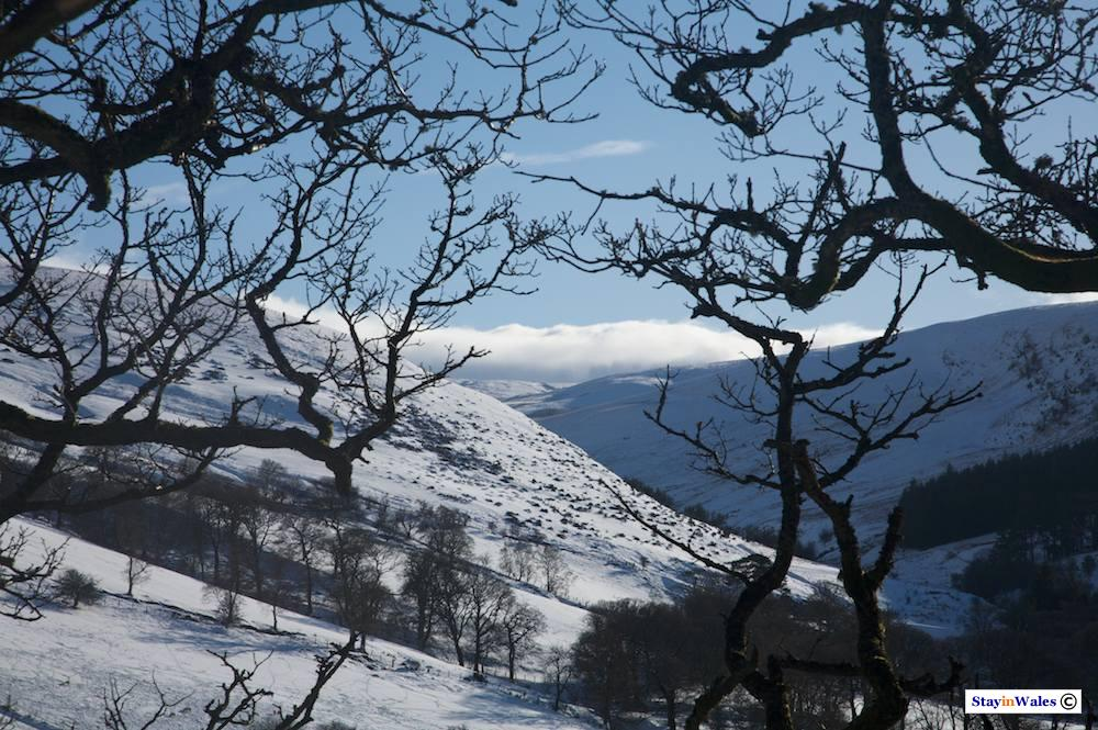 Snow in the Cambrian Hills