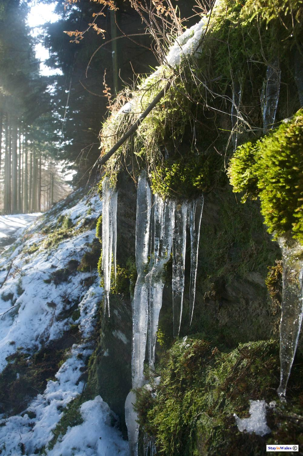 Icicles in the Elan Valley