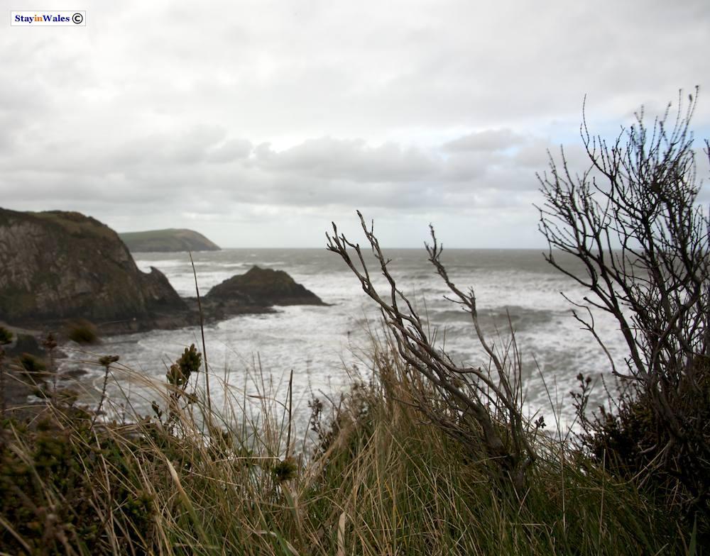 Coastal footpath near Parrog, Pembrokeshire