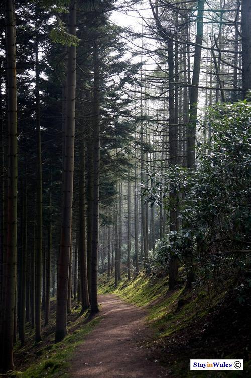Lady's Walk path, Hafod Estate