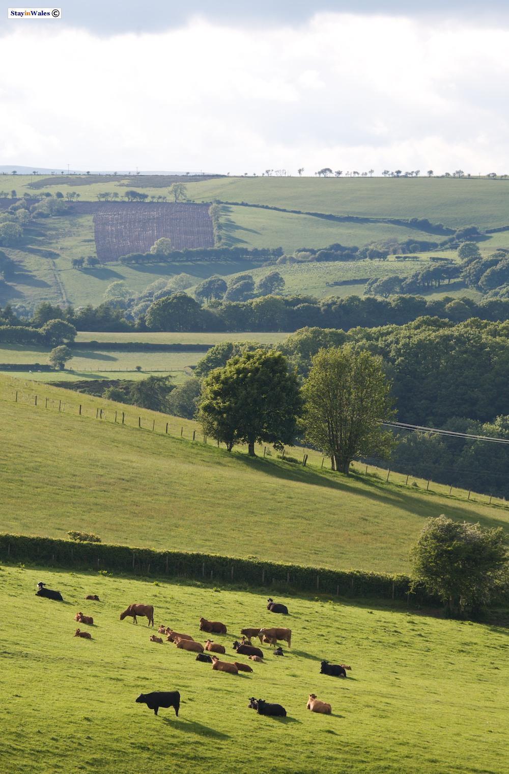 Wernygeufron Hill, Radnorshire