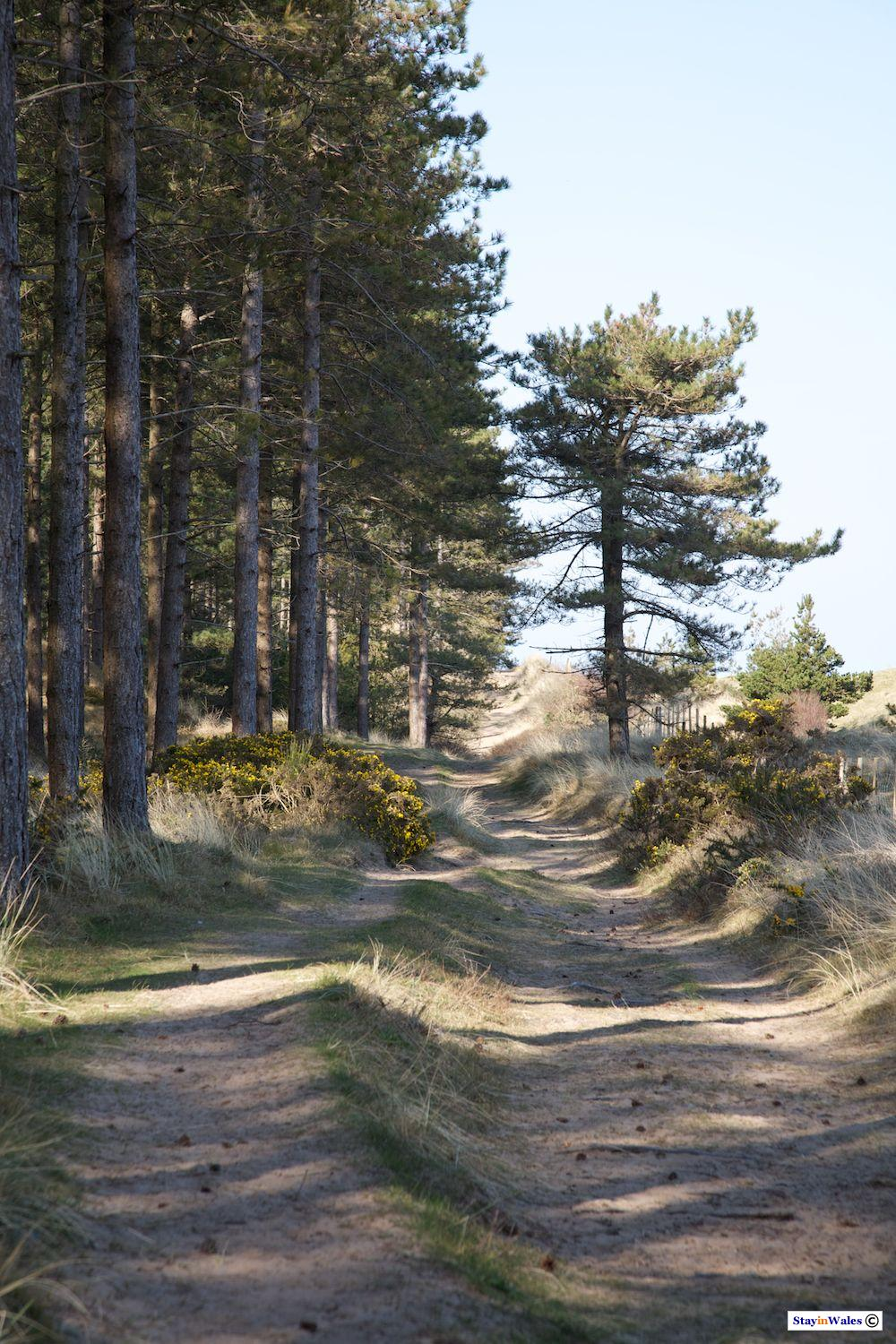 Newborough Forest, Anglesey