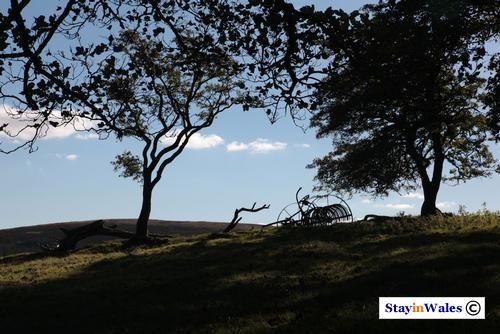 Horse drawn hay rake, Trembyd