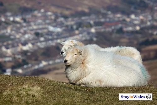 Bwlch-y-Clawdd, Rhondda