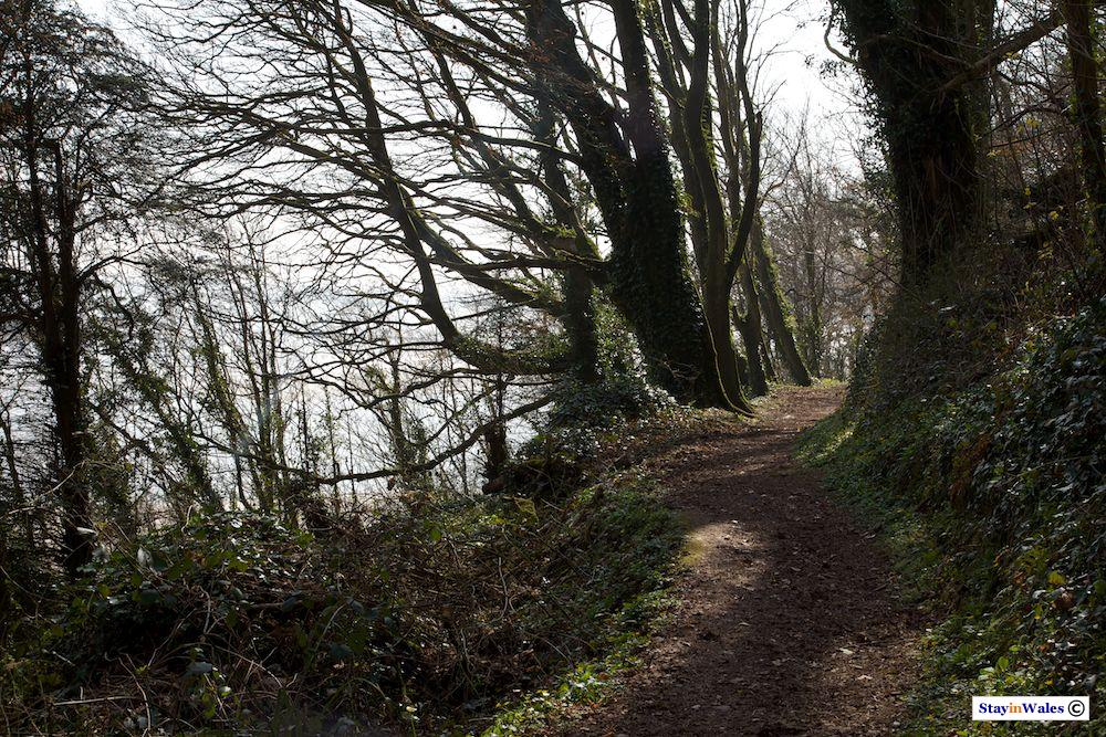 Woodland path at Laugharne