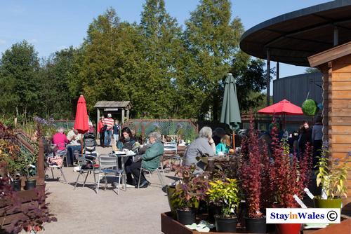 Cafe at NBGW Carmathenshire