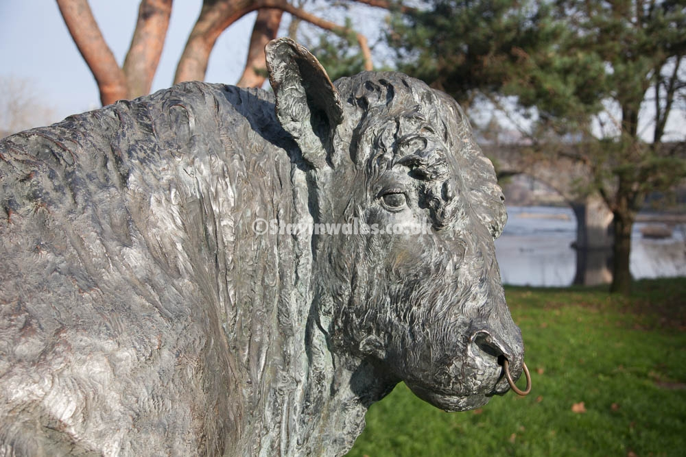 The Builth Wells bull
