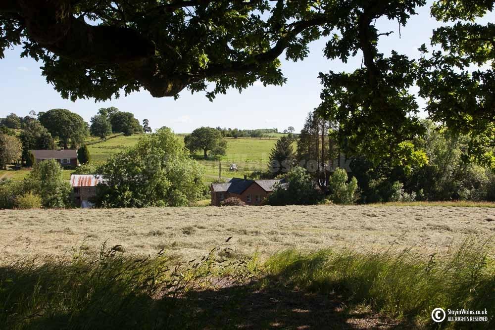 Cut Hay near Llandrindod