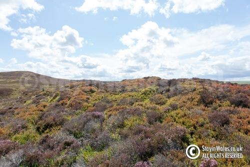 Moorland in summer, Elan Valley
