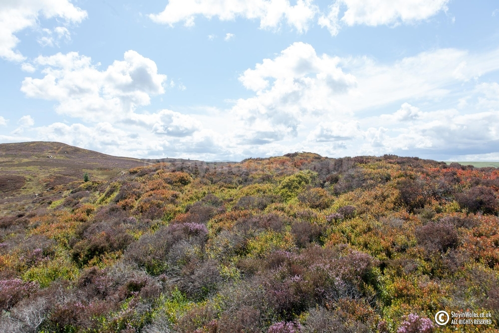 Moorland in summer, Elan Valley